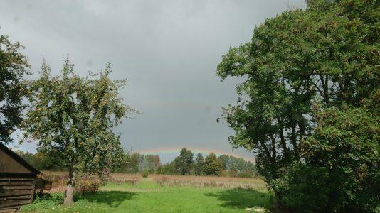 Blisveld Rainbow